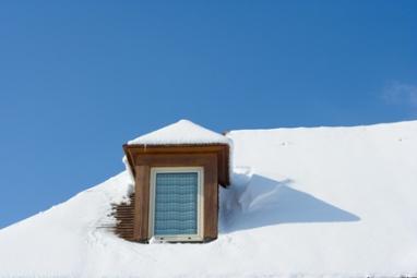 Chien assis sous la neige