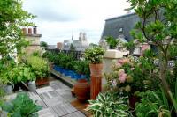 Toit terrasse avec plantes